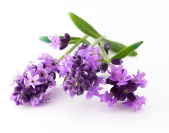 Floralterapia